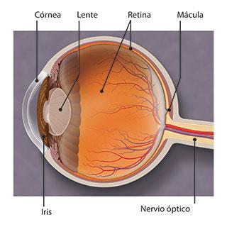 DMAE (degeneración macular relacionada con la edad)
